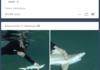 sharks in the ocean