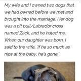 Dog feels