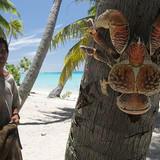 Cute Coconut-Crab's